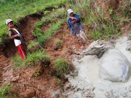 un carabao si crogiola nel fango meglio di qualsiasi speleo
