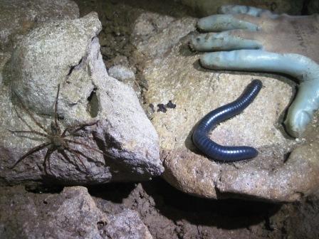 fauna di Kamanga Cave