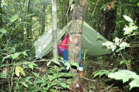 Campo in foresta