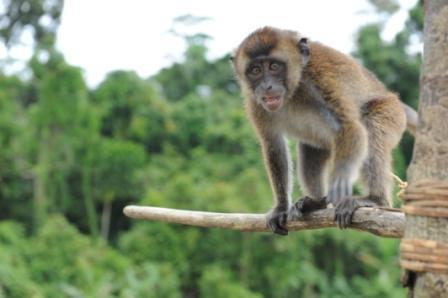 Scimmietta vicino a Canlobo