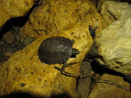 Tartaruga in Sulpan Maliw