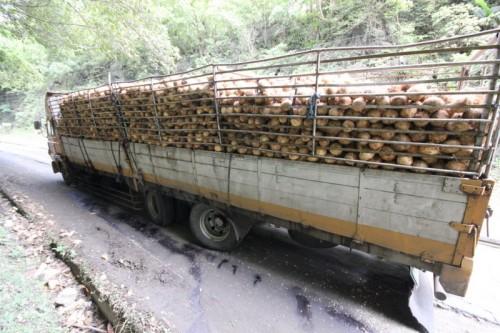 assali posteriori spaccati per questo camion stracarico di noci di cocco..